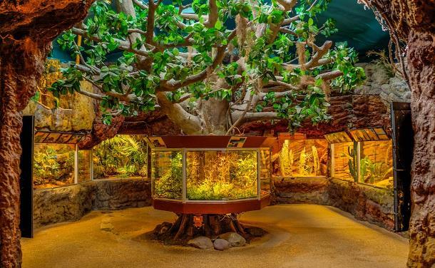 Мир аквариумистики на сайте