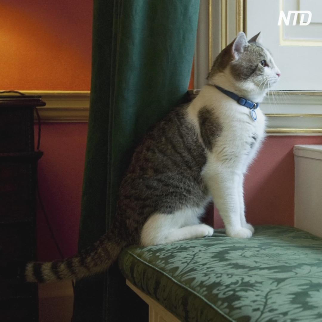 Какую должность занимает титулованный кот в резиденции британского премьера