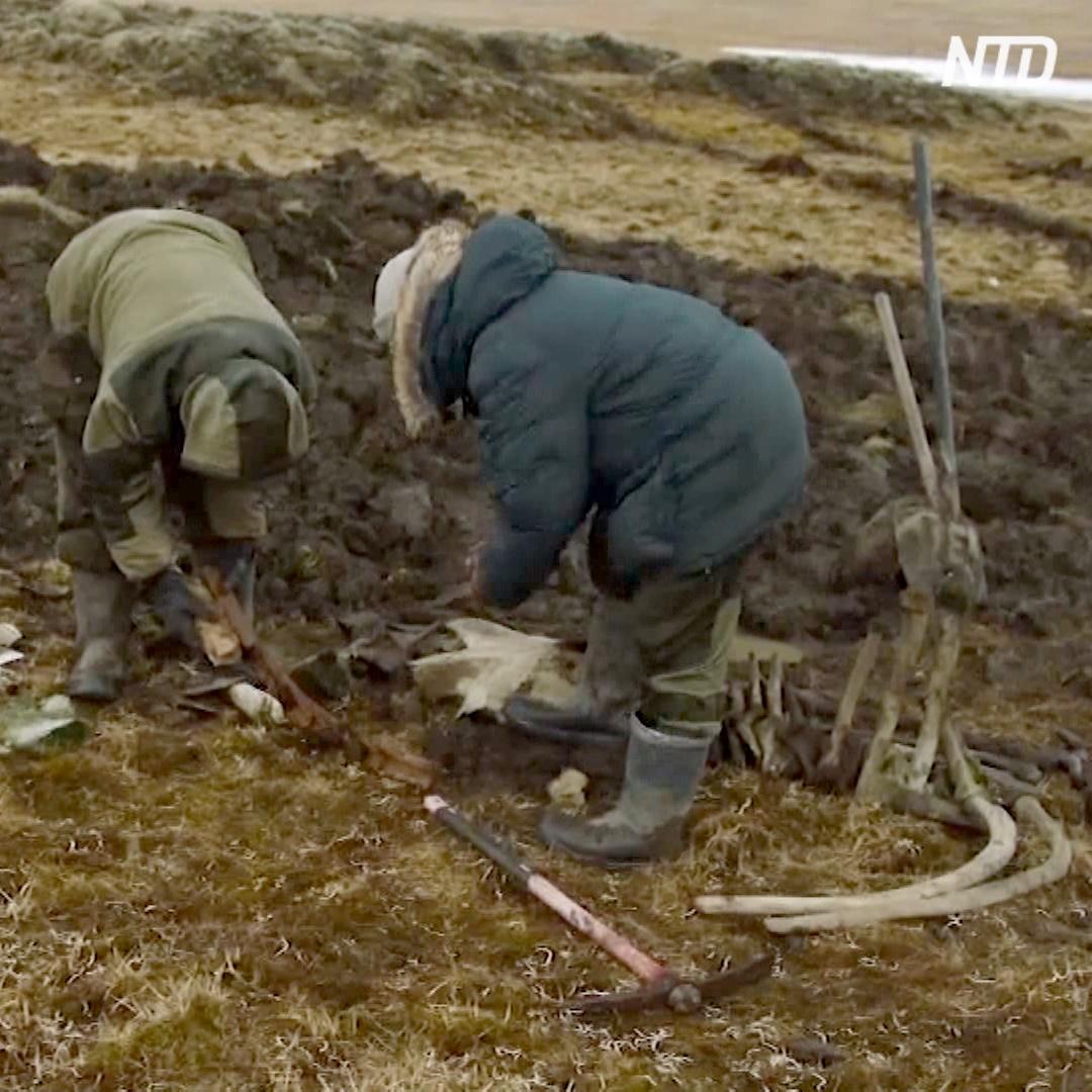 Кости мамонта с зарубками древних людей нашли в Сибири