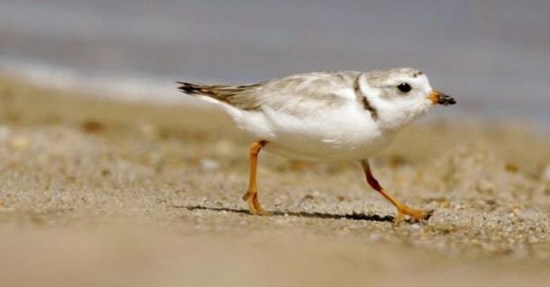 Концерты на американском пляже отменили из-за птиц