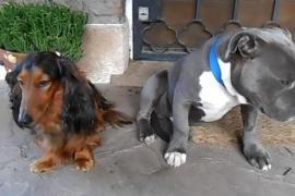 Мужчина устроил допрос своим собакам. Это очень смешно!