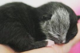 Природный мейкап прославил кошку