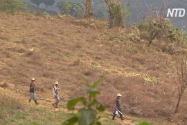 Центральноамериканские фермеры по выращиванию кофе мигрируют в США