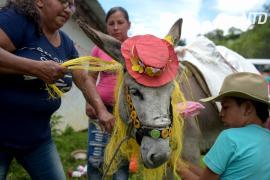 В Колумбии прошёл фестиваль ослов