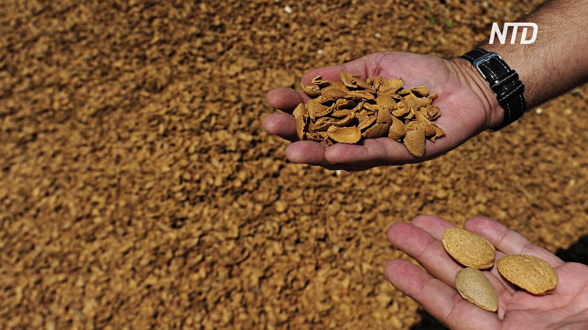 Производители миндаля в США боятся влияния индийских пошлин