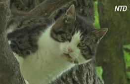 В Польше кот шесть лет живёт на дубе и вниз не собирается