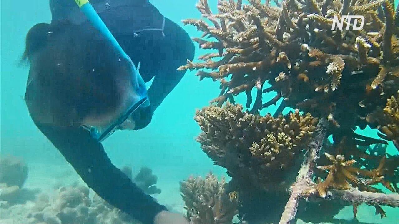 Кораллы погибли из-за двух резких скачков температуры