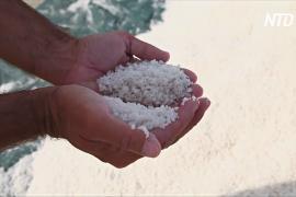 Соль из Герандта – «белое золото» Франции