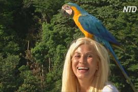 Попугаи ара дарят страдающим от кризиса венесуэльцам минуты радости