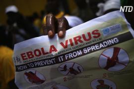 ВОЗ объявила эпидемию Эболы международной ЧС