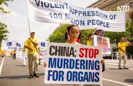 20 лет преследований: по всему миру требуют остановить убийства в Китае