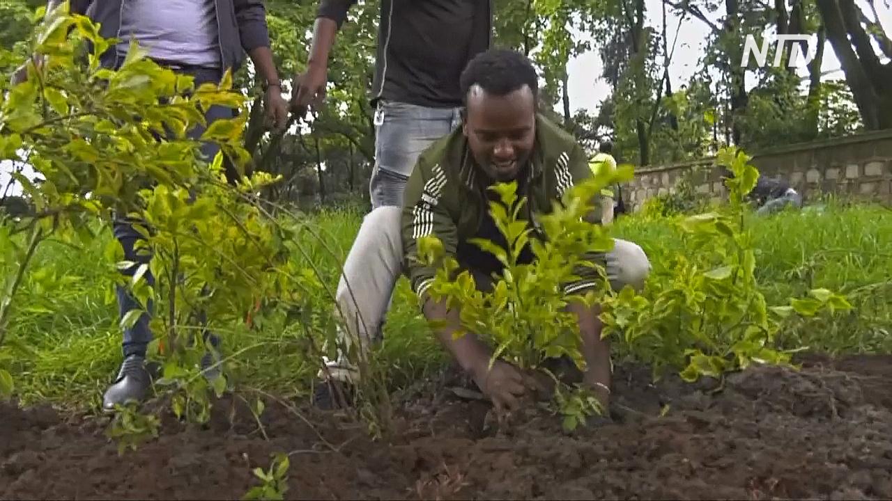 В Эфиопии за день высадили 350 млн деревьев