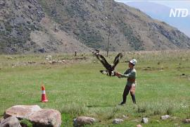 «Салбурун» в Кыргызстане: охота с луком, беркутами и тайганами