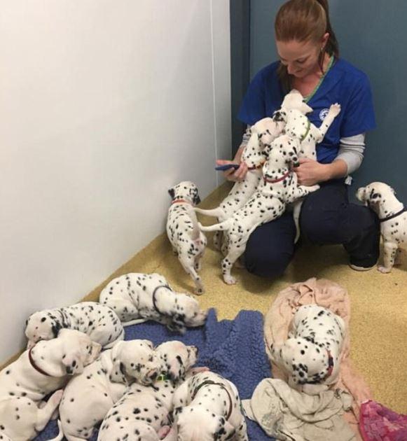 2 1 - Собака родила щенков больше, чем в «101 далматинец»