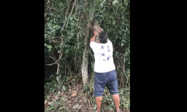 Как ленивцу помогли «перебежать» дорогу