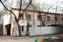 «Вежливый Лось» – сеть хостелов в Москве