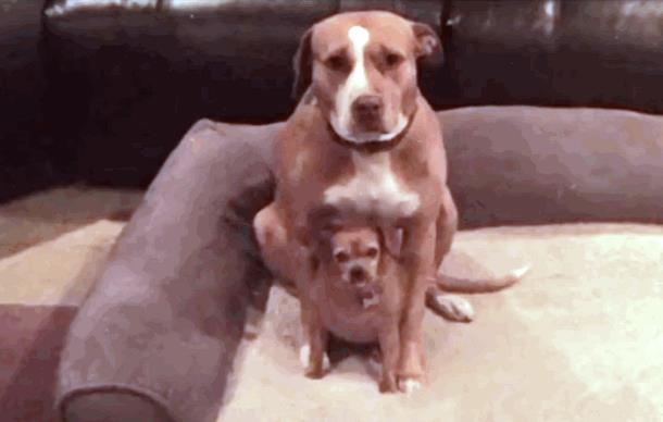 Собака отказалась уйти из приюта без друга