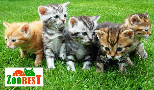 «ЗООБЕСТ» для владельцев животных