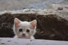 Кошка из трущоб Кении переехала в США