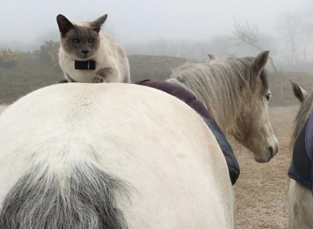 Кот выбрал себе лошадь для прогулок верхом