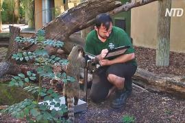 Лондонский зоопарк: как взвесить льва, дикобраза и суриката