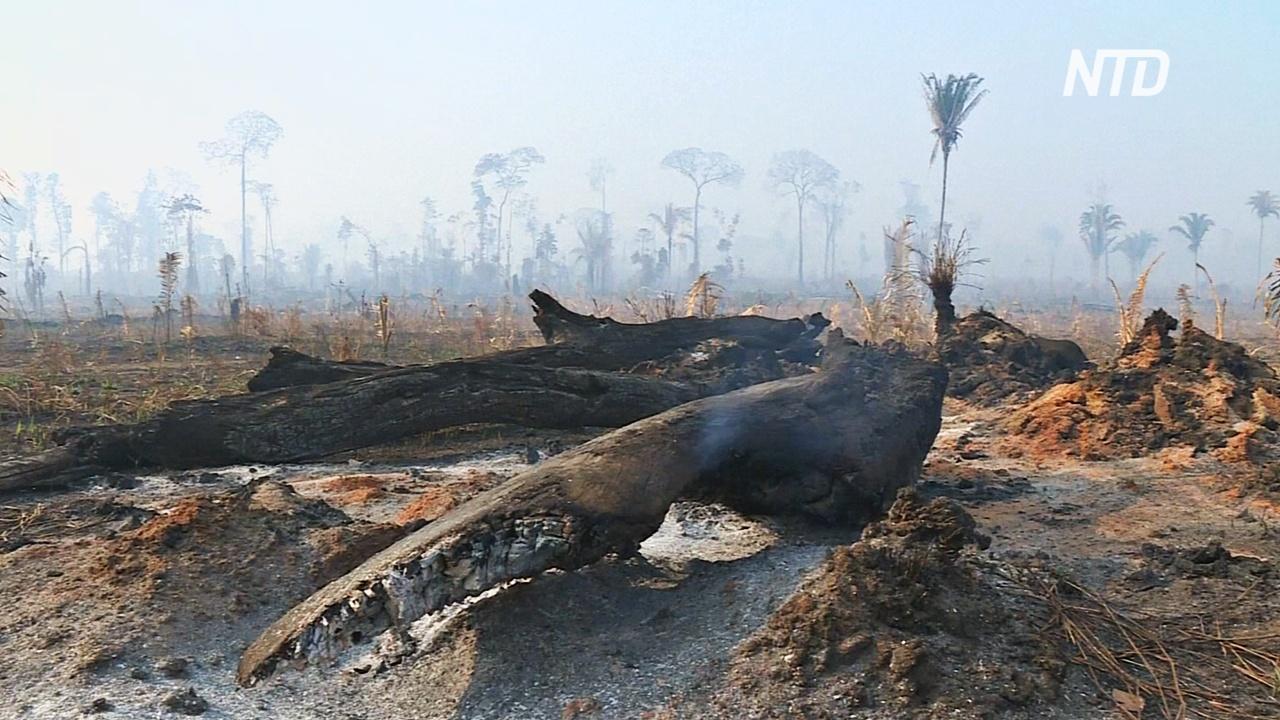 К тушению пожаров в бразильской Амазонии привлекли военных
