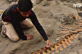 В Перу нашли древние останки кашалотов, принесённых в жертву