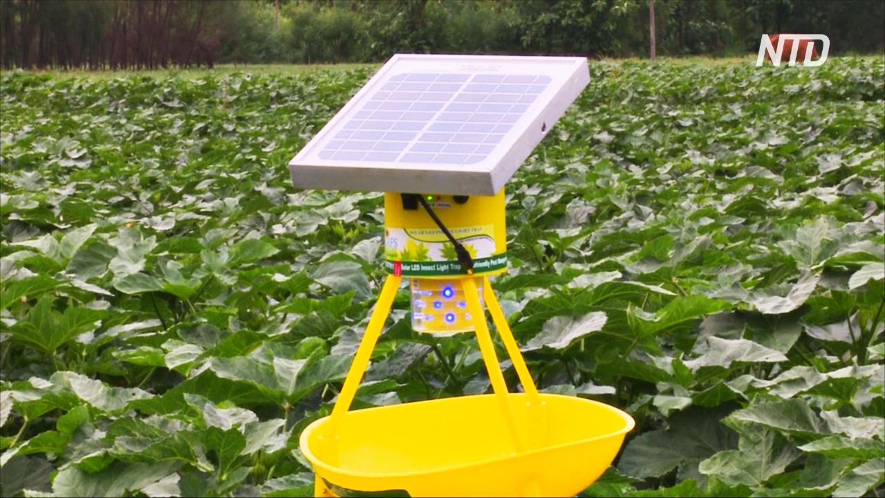 В Индии делают ловушки для насекомых, работающие на энергии солнца