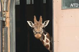 Зоопарк, лодка или юрта: необычные отели Лондона