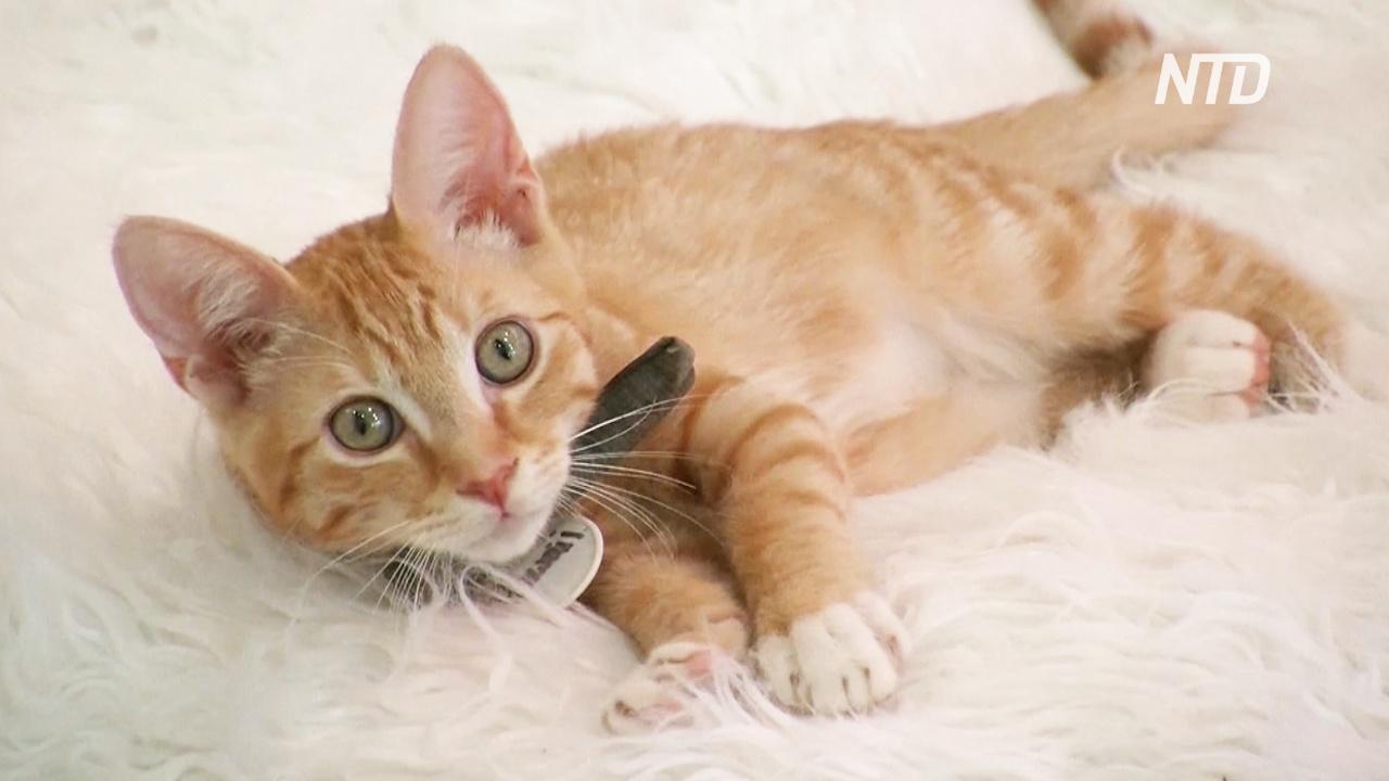 Выпить кофе и забрать кошку: котокафе в США находит дома питомцам