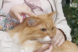 Как в Тюмени чествуют сибирских кошек, спасших Эрмитаж от крыс