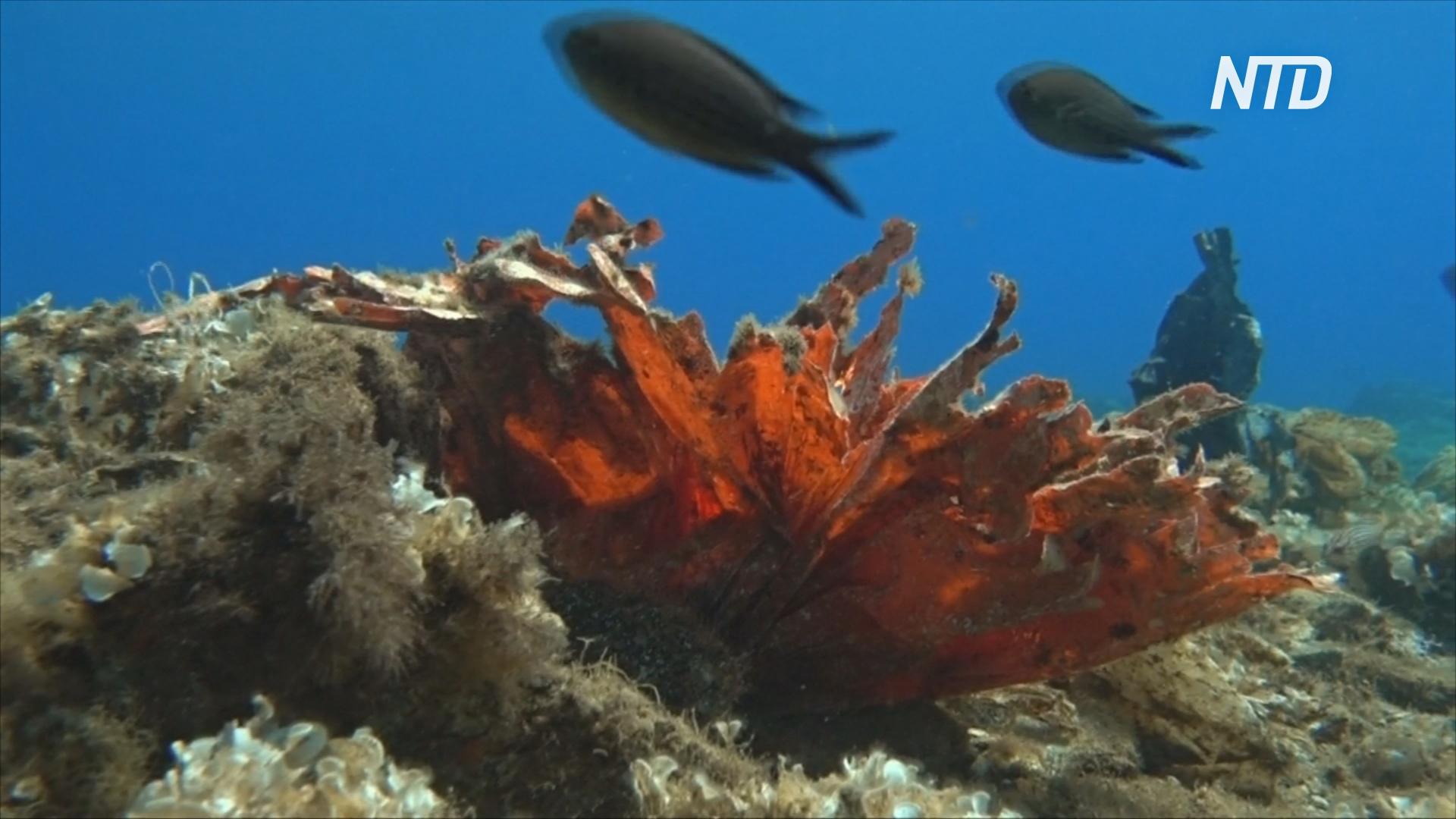 В Эгейском море нашли чудовищный риф из полиэтиленовых пакетов