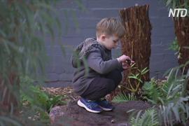 Австралийский детский сад избавился от всех пластиковых игрушек