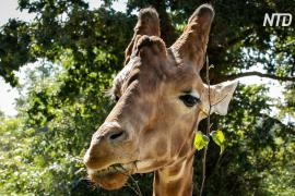 Акулы, слоны и жирафы попали под международную защиту