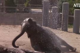 Слоны наслаждаются душем в зоопарке Скопье