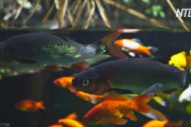 Как рыбки парижского океанариума помогают выращивать овощи