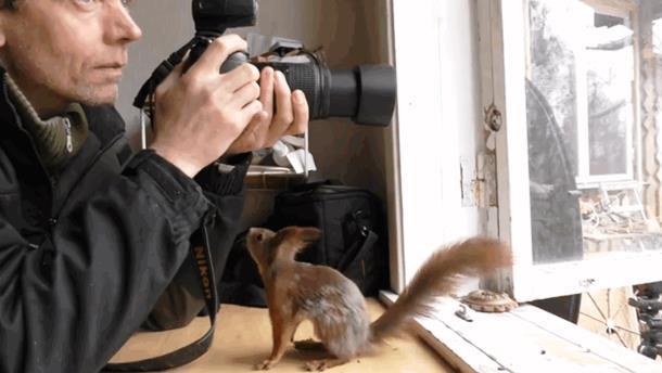 Белки не замечают фотографа и прыгают по камере. Видео