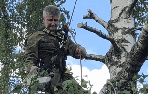 Арборист – специалист, занимающийся удалением деревьев