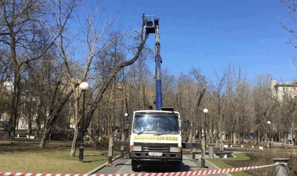 2019 08 25 165547 - Арборист – специалист, занимающийся удалением деревьев