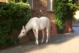 Лошадь, которая гуляет сама по себе, удивляет туристов