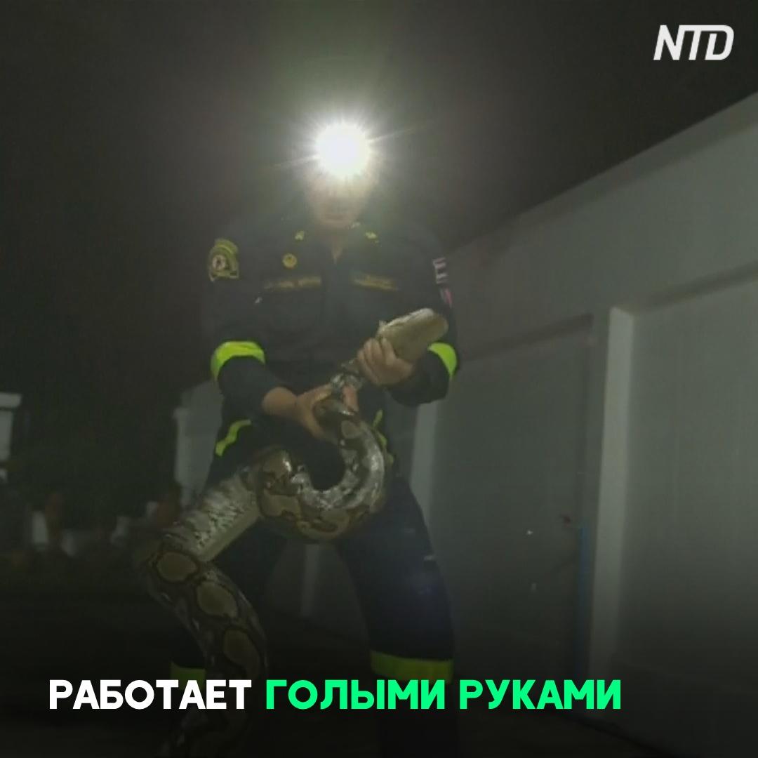 Пожарный из Бангкока ловит кобр и питонов голыми руками