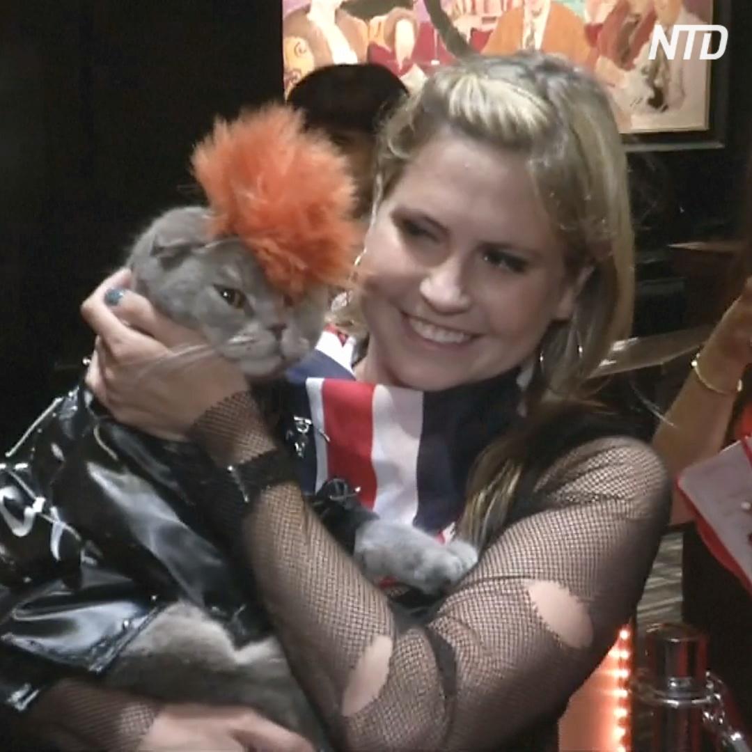 Кошачий показ мод прошёл в отеле Нью-Йорка
