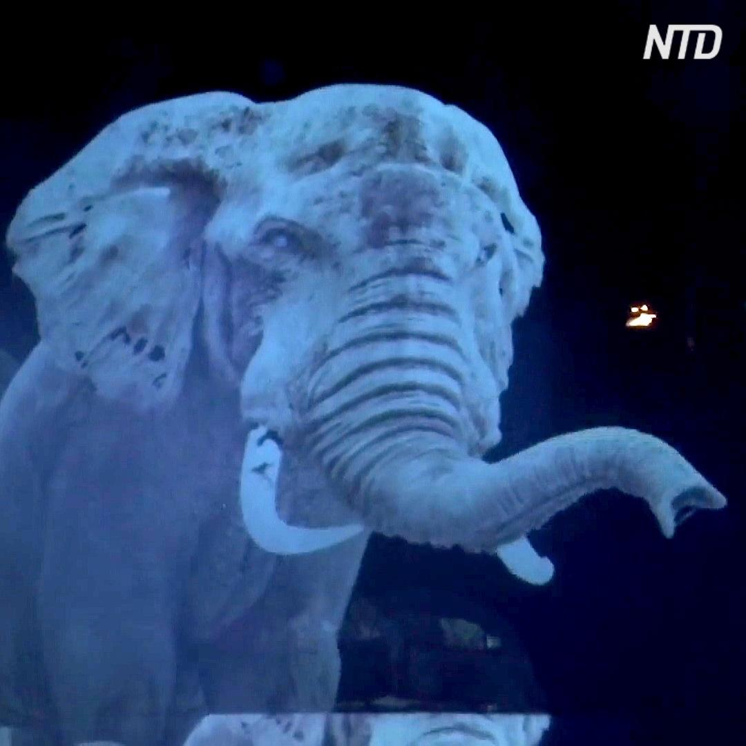 Животные в виде голограмм выступают в немецком цирке