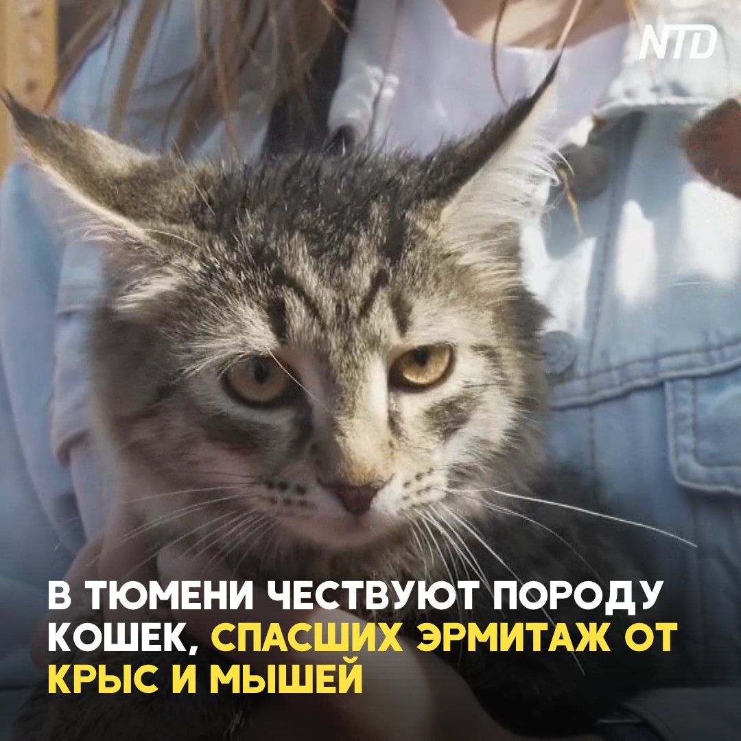 Кошки, которые спасли Эрмитаж от крыс