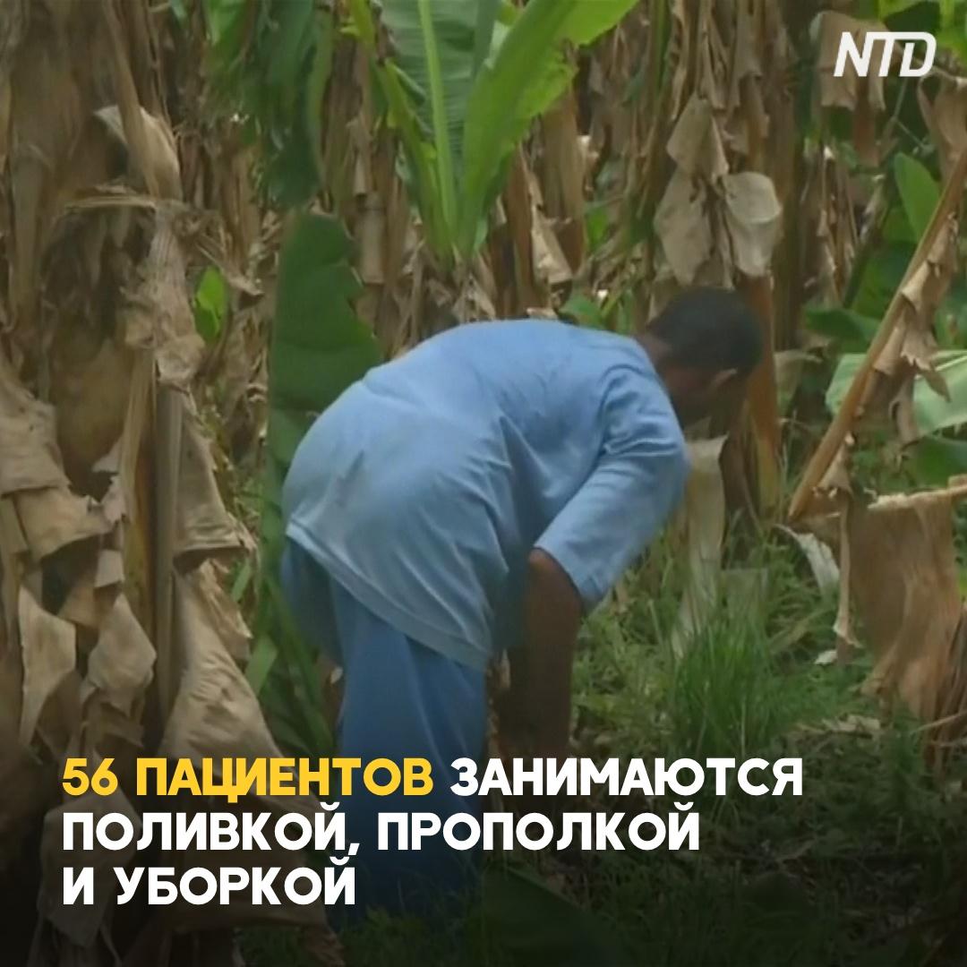 Психические заболевания в Индии лечат работой на ферме