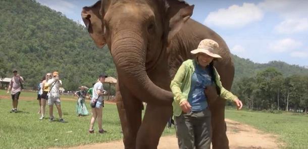 Novyj risunok 1 5 - Слониха заставила женщину петь колыбельную слонёнку