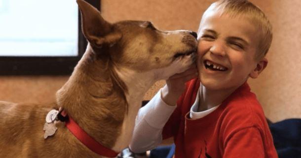Шестилетний мальчик спас более 1000 собак от смерти