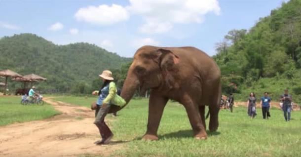 Слониха заставила женщину петь колыбельную слонёнку