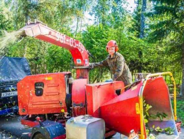 Novyj risunok 2 4 - Арборист – специалист, занимающийся удалением деревьев