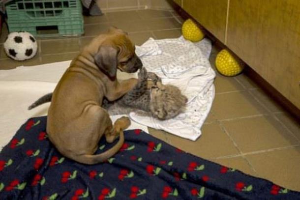 Novyj risunok 8 4 - Собака и гепард – лучшие друзья!